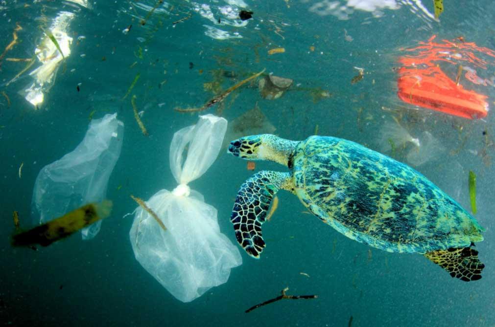 海洋プラゴミに苦しむウミガメ