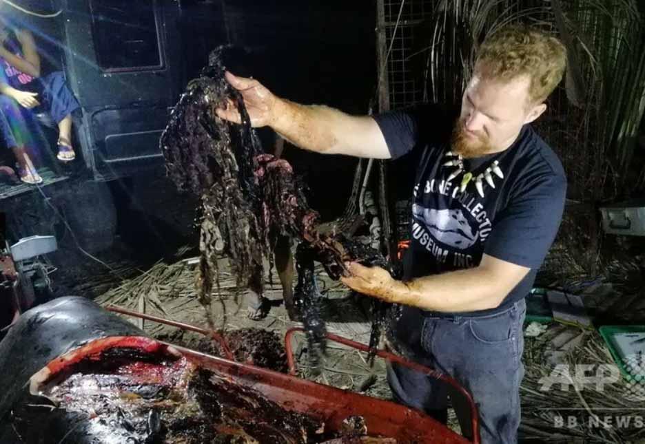 40kgのプラゴミのせいでクジラ餓死